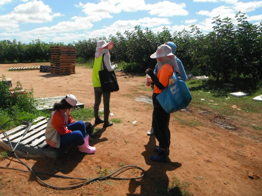 blog voyager seule fruit picking